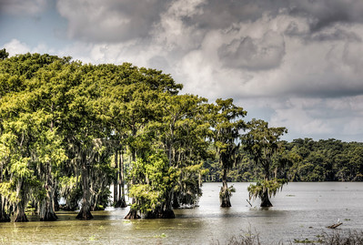 bayou-lake-trees-4-4