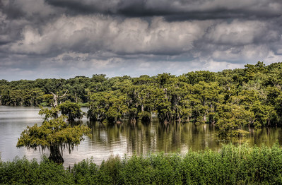 bayou-lake-cypress-trees-6