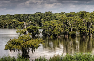 bayou-lake-cypress-trees-7