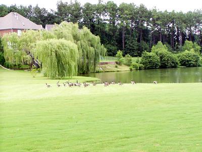 20  Todd's neighborhood lake and birds
