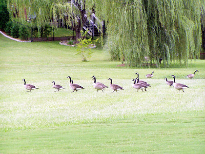 21  Todd's neighborhood lake and birds