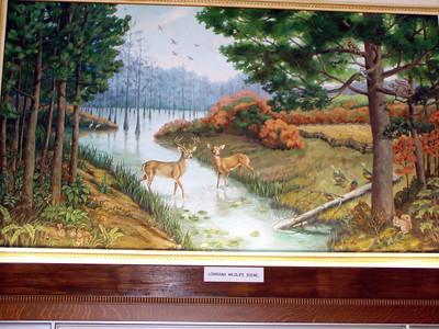 18  Louisiana Wildlife Scene