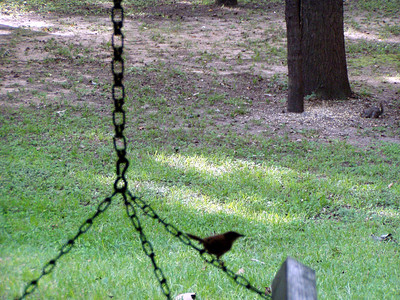 17  Bird on Swing