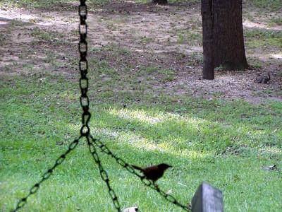 17  Bird on Swing