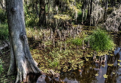 swamp-tree-pond-1