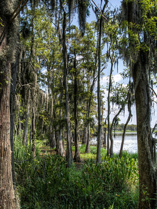 swamp-trees-lake-2-1
