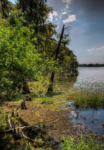 swamp-trees-lake-1