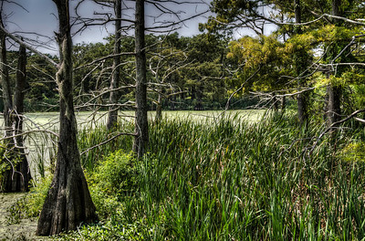 swamp-trees-grasses-4