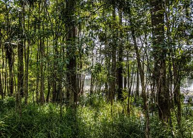 swamp-trees-2
