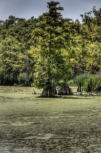 green-swamp-1