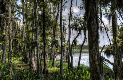 swamp-trees-lake-3-5
