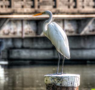 white-crane-bird-3