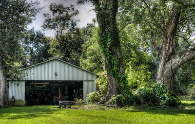 bayou-shed-trees-2