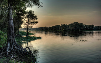 river-cypress-tree-1