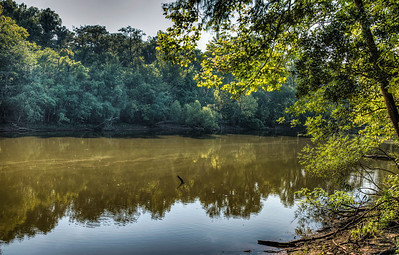 river-trees-reflection-1