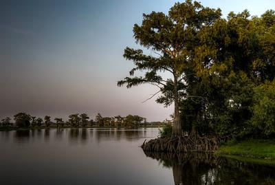 river-cypress-tree-3-1