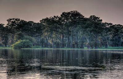 mossy-bayou-cypress-trees-2-1