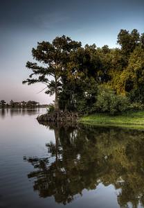 river-cypress-tree-2-2