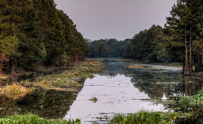 bayou-swamp-1-2
