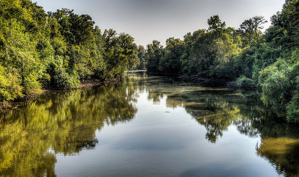 river-trees-2