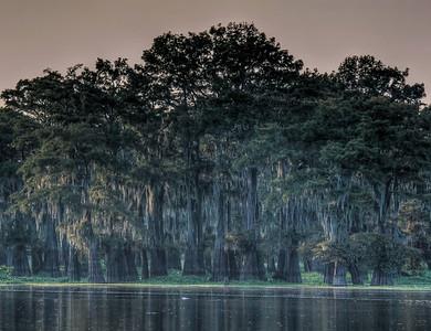 mossy-bayou-cypress-trees-2-1-2