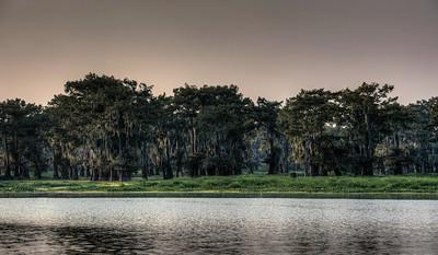 mossy-bayou-cypress-trees-2