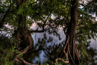 river-tree-roots-1
