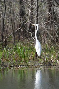 Crane - Fishing