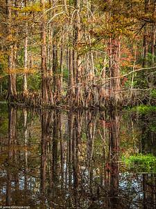 swamp_poles