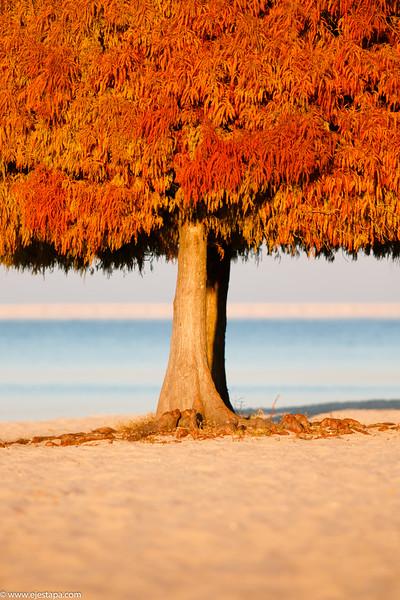Red Tree Winter