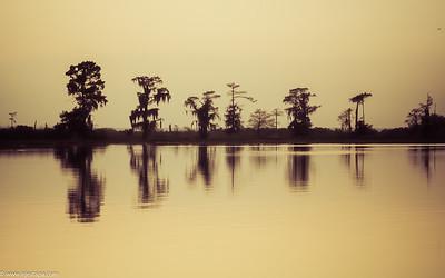 LA_swamp_scene