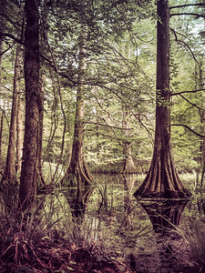 swamp_insta2_2018