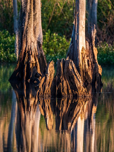 stumps_reflect