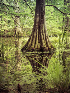 swamp_insta_2018
