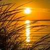 Swamp Grass Sunset