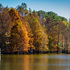 Louisiana Fall Colors