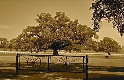Louisiana Photography