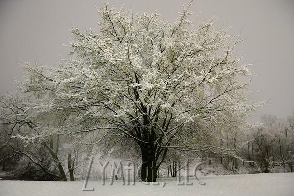 Snowfall in Louisville