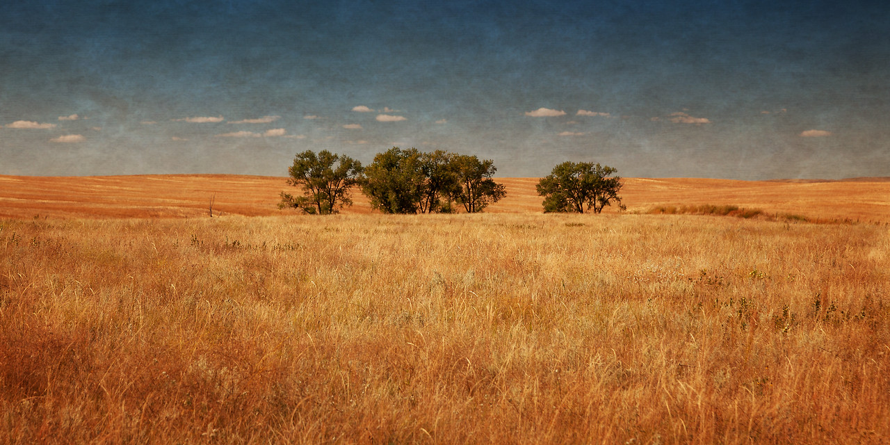 Badland Field and Trees 2
