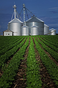 Soy Bean Rows and Silos