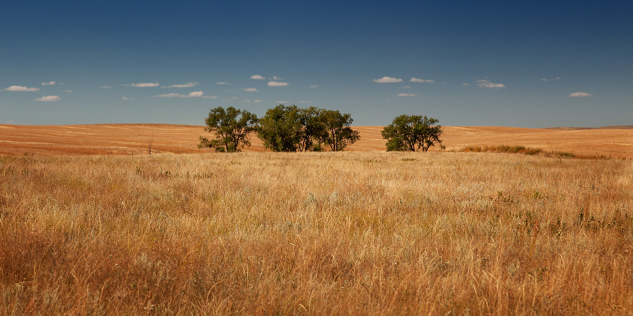 Badland Field and Trees