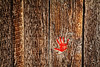 Red Hand on Barnwood Death Valley 2