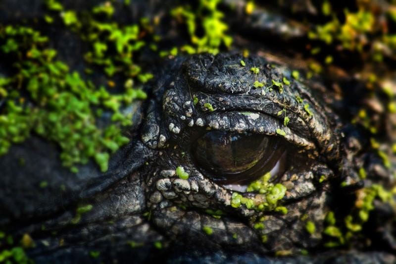 open-eye.jpg