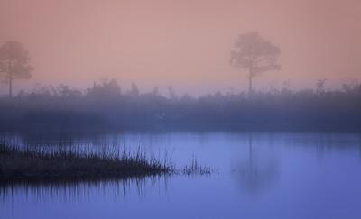 Florida-Fog