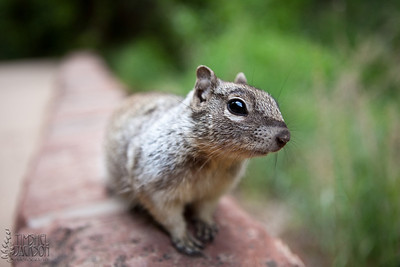 My home squirrel, Fluffy. We go way back