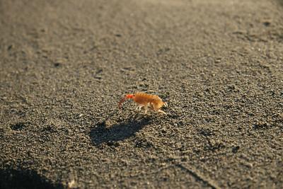 Shrimp 3