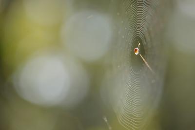 Genni Cooper:The Webs We Weave