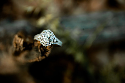 00001-©ADHPhotography2019--SARAHALEX--Engagement--September14