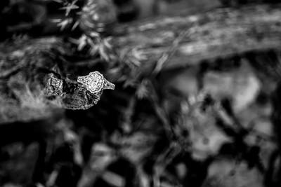 00008-©ADHPhotography2019--SARAHALEX--Engagement--September14bw