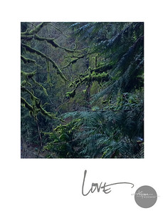 with least resistance life grows love is always there no matter where one goes  {multnomah falls, january 2013}  A new Valentine get's mailed out each year & is available for full size art purchase. Contact the studio for 2011's LOVE print for your wall. studio@alyssamiserendino.com